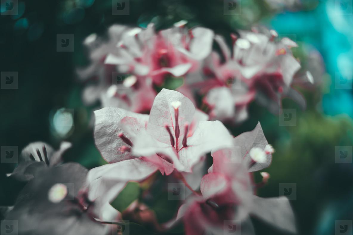 Dark Garden 05