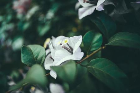 Dark Garden 06