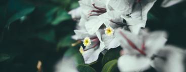 Dark Garden 01