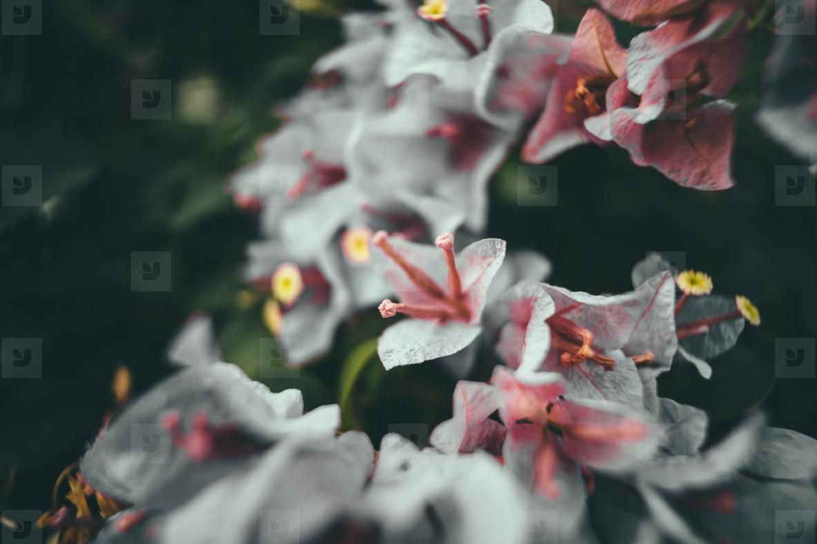Dark Garden 02