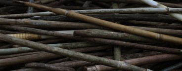Dried Wood