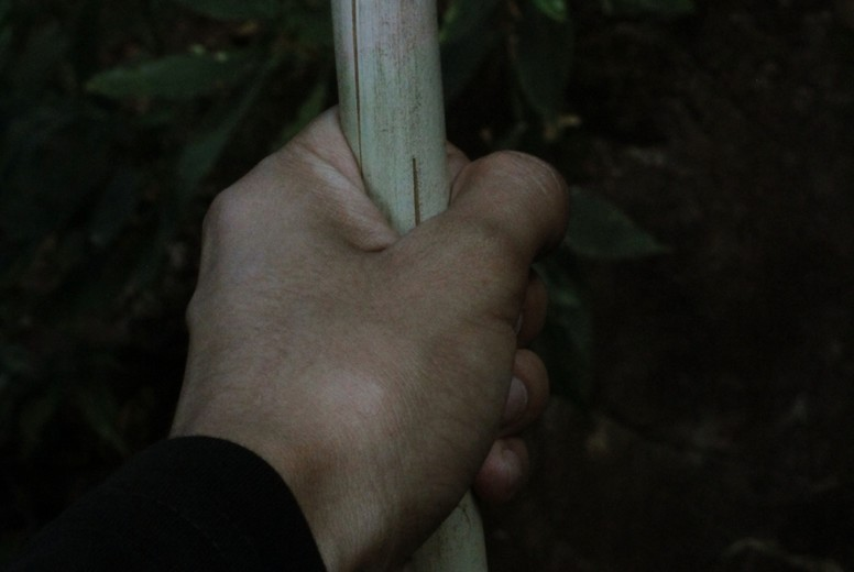 Hand  holding wooden stick