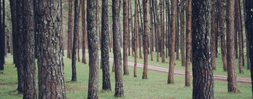 Row of trees  01
