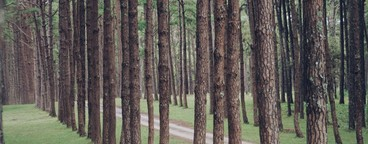 Row of trees  02