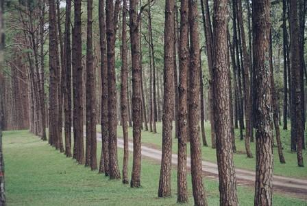 Row of trees 02