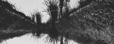 Black and White photo  44
