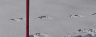 Alpine Views  15