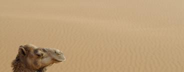 Desert Dreams  02