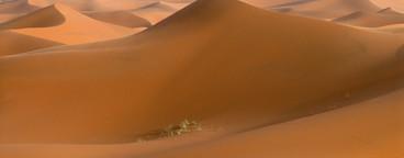 Desert Dreams  04