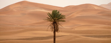 Desert Dreams  06