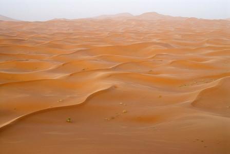 Desert Dreams 08