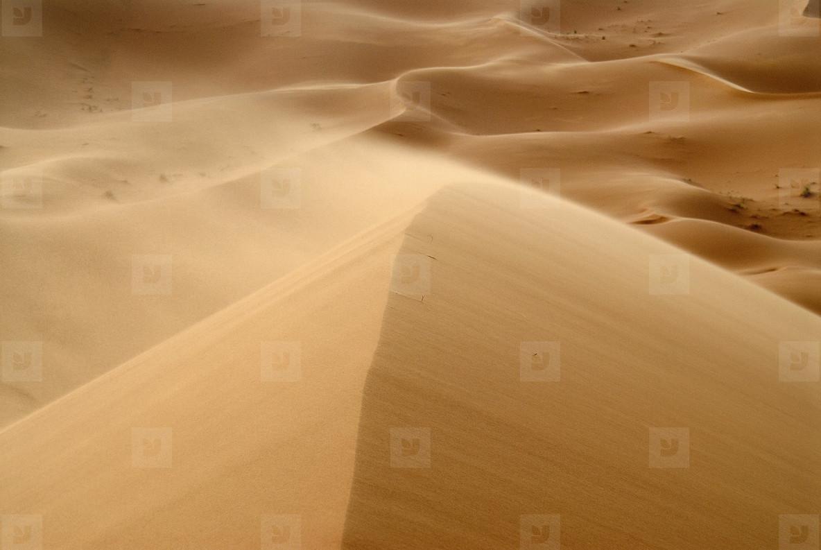 Desert Dreams  10