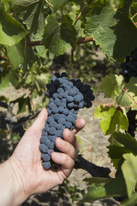 Vintage Wine 07