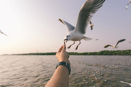 Pigeons  02