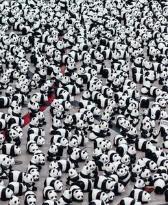 1600 Pandas campaign
