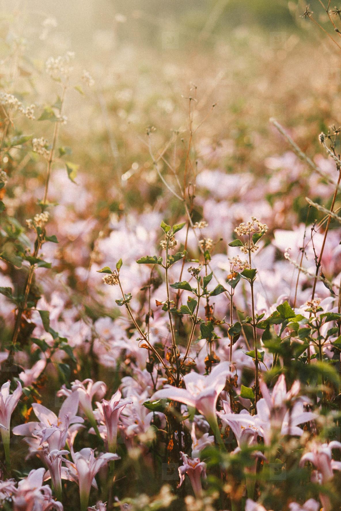 Pink Flower  03