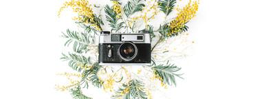 Retro camera and yellow acacia