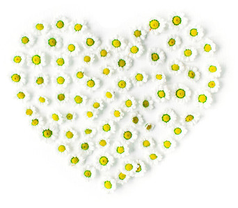 Heart made with chamomile buds