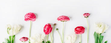 Ranunculus and tulips