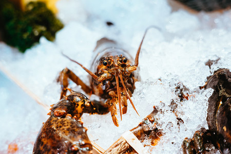 Lobster on Ice
