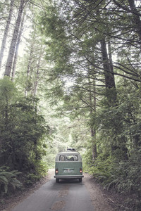Vintage VW Bus in the Woods