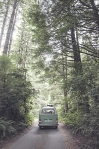 Vintage VW Bus in the Woods