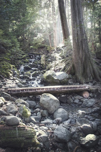 Bridge in woods of Northern Cali