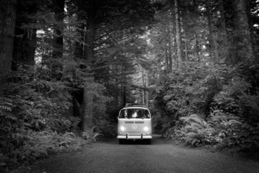 VW Bus in California Redwoods