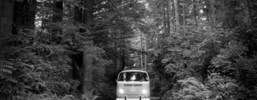 VW Bus in California Redwoods
