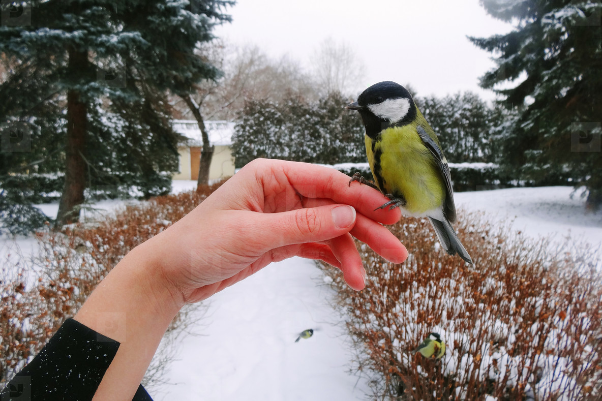 Bird Feeding on a Hand