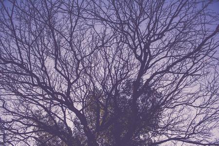 Twilight branches