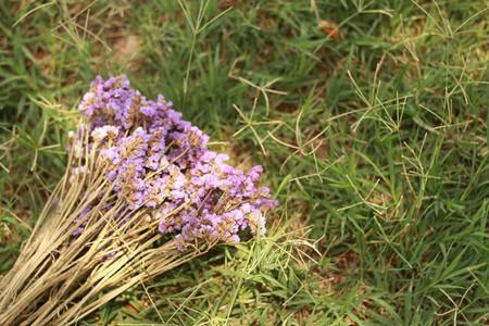 Flower on the green grass
