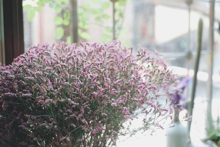 Gypso flower