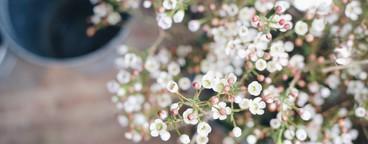 white tiny flower