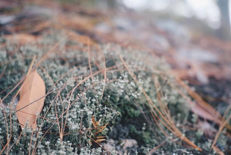 Wild moss