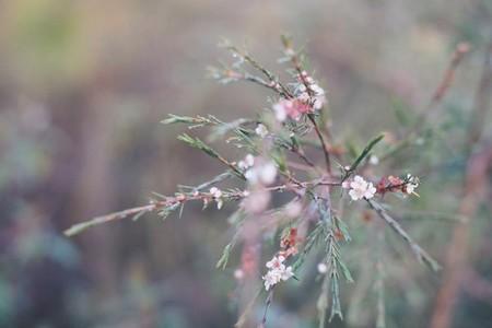 Pine039s flower