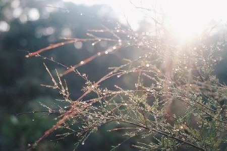 Pine 039s leaf