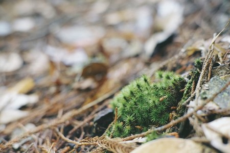 Woody moss