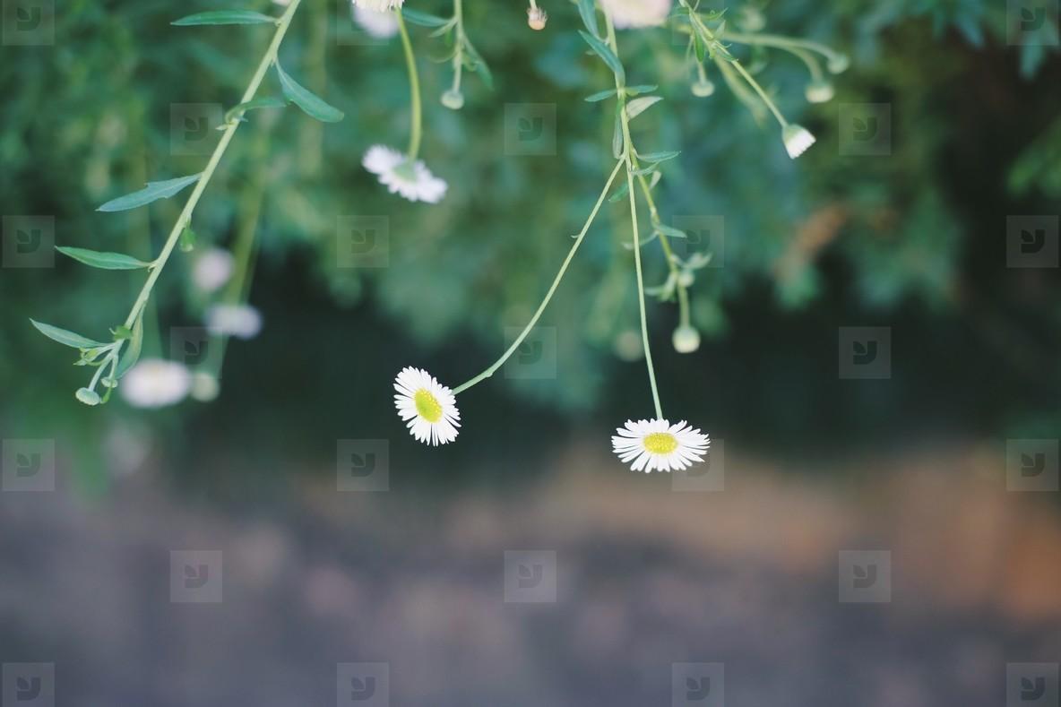 Couple flower