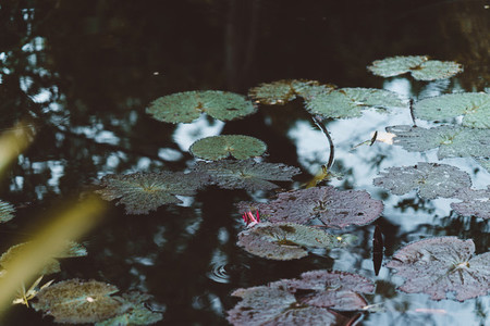 Tropical Lily Pads 2