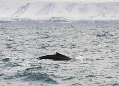 Glacial Vistas 19