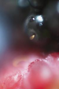 Macro Fruit  21
