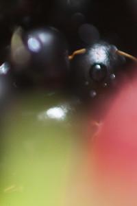 Macro Fruit  25