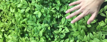 Hand with green nature