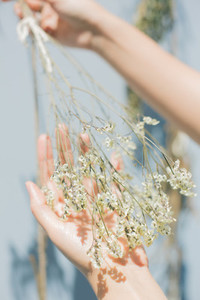 Dry Flower in hands
