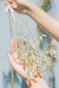 Dry Flower in hands