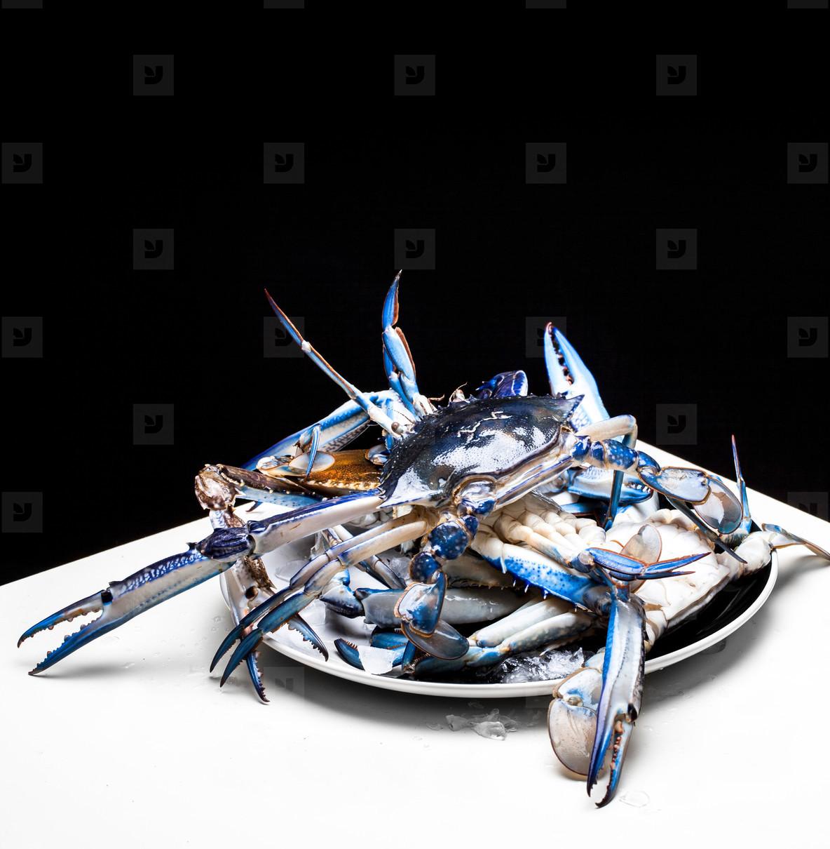 Fresh Blue swimmer crab