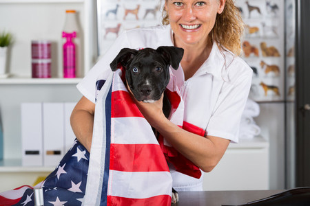 American Staffordshire clinic