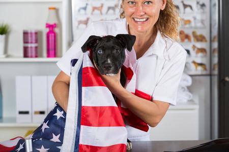 American Staffordshire clinic