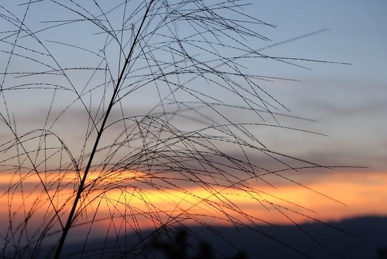 Grass flower and sunset  02